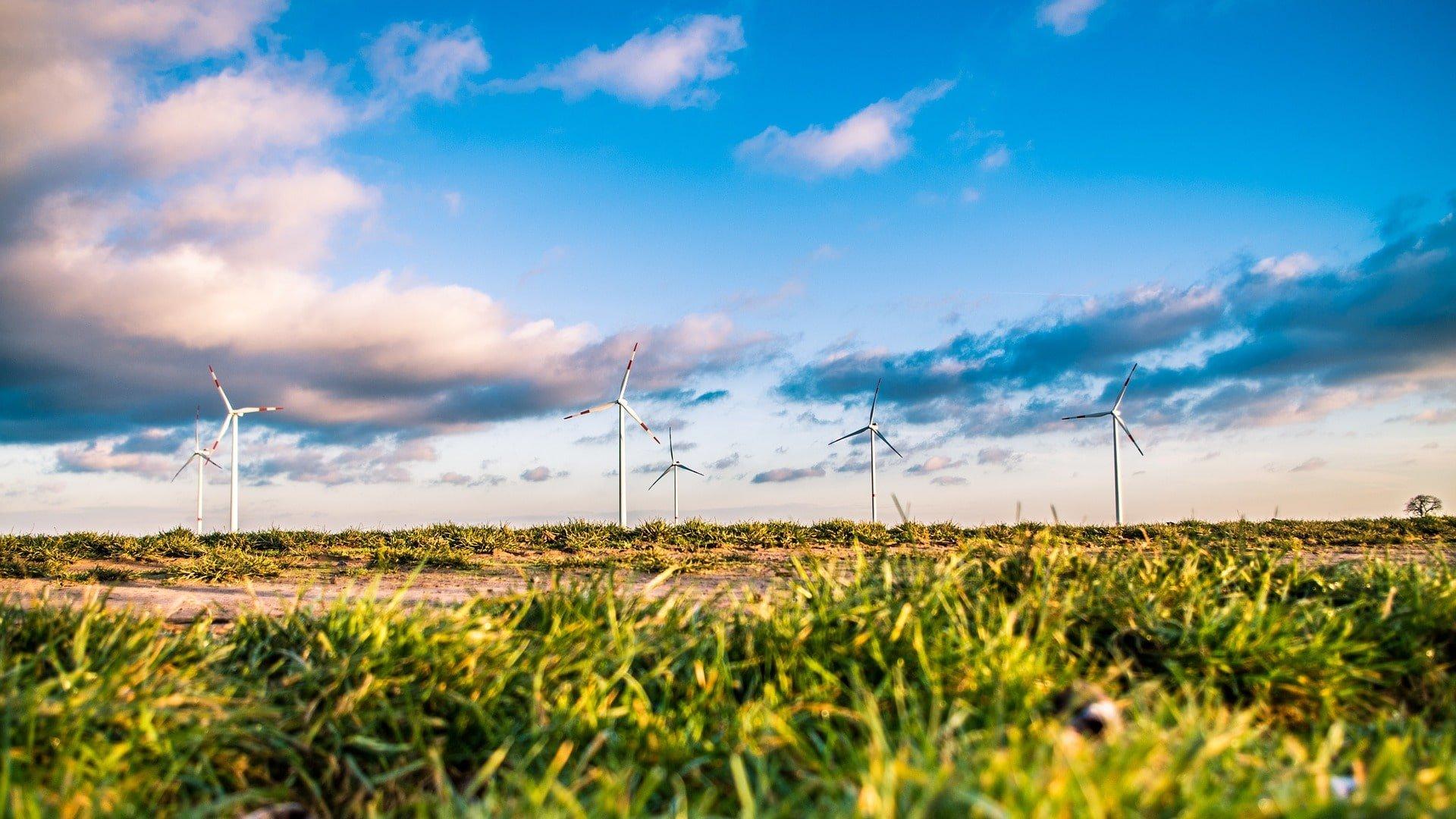 Tuulipuisto ja vihreätä nurmikkoa